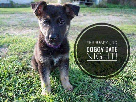 Doggy Date Night Wishes for Whatsapp