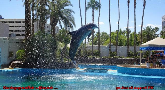 Mirage Casino Dolphin Exhibit