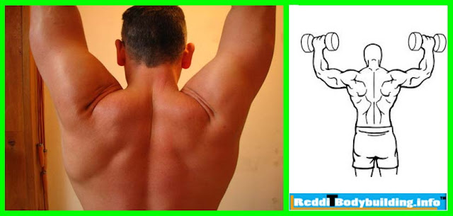 There are many classes of Weight Lifting Exercises for Shoulder