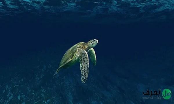 تصنيف السلاحف البحرية