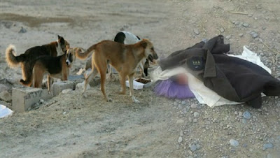 وإذا الموءودة سئلت.. بأي ذنب قتلت الكلاب تنهش رضيعا في شبرا الخيمة..