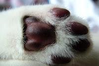 kattengrit