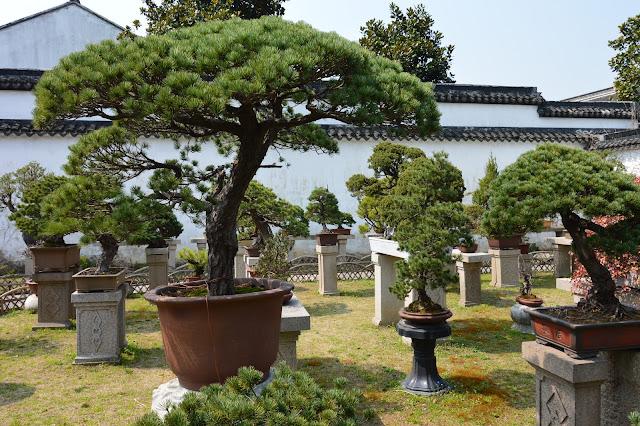 Jardin des banzais à Suzhou