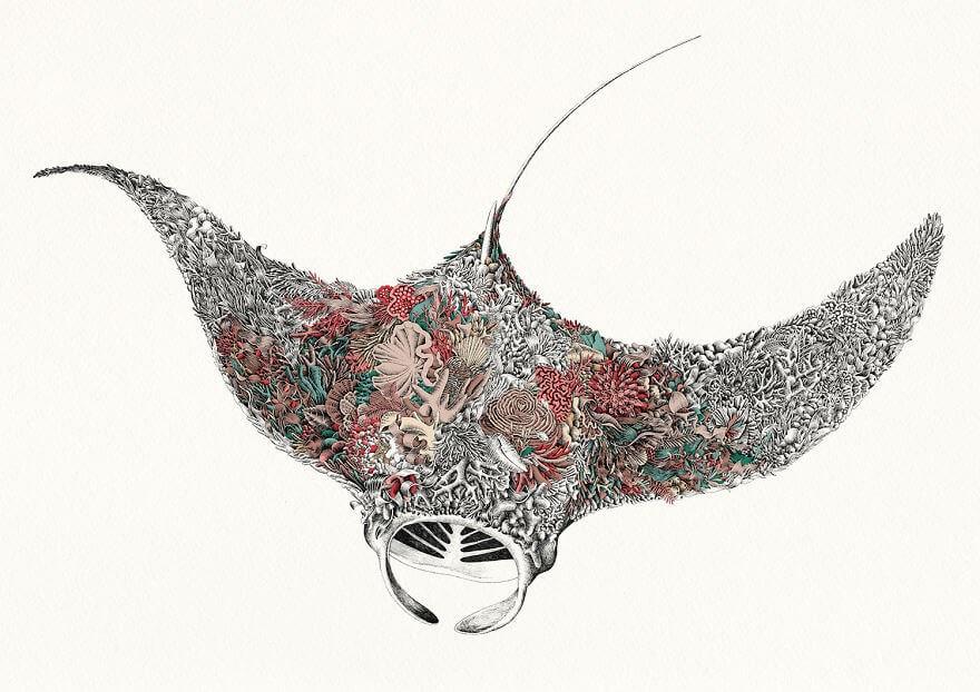 05-Reef-Manta-Nathan-Ferlazzo-www-designstack-co