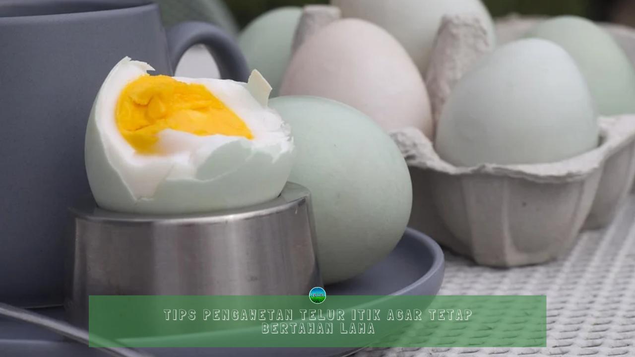 Tips Pengawetan Telur Itik Agar Tetap Bertahan Lama