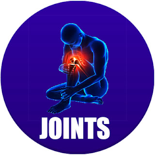 joints in the body in spanish