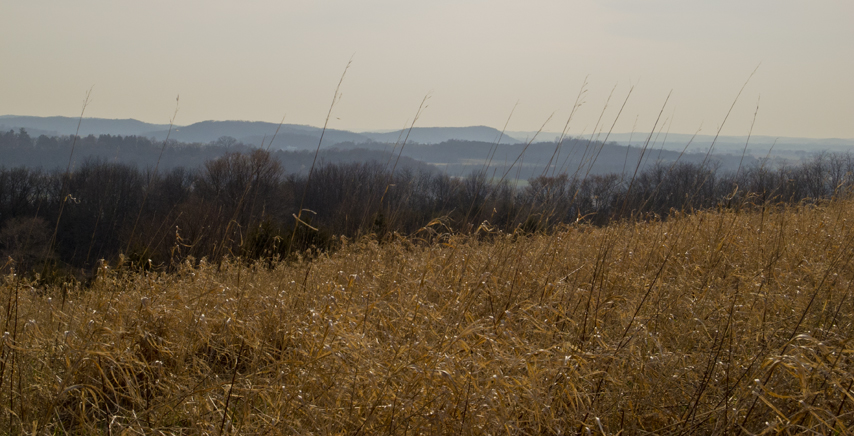 tall prairie grass with views of undulating hills beyond