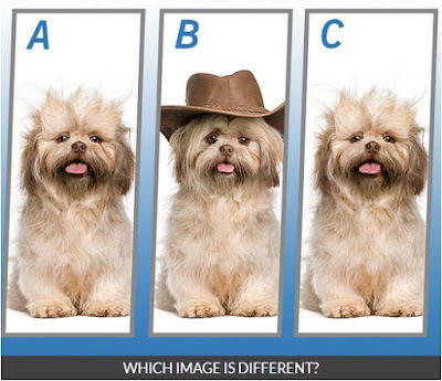 Quiz Diva Spot the Different Dog Quiz Image3
