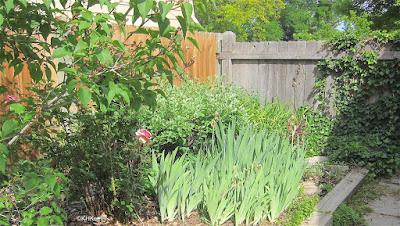 iris, lilacs, roses