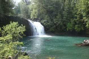Parque Nacional Puyehue, South of Chile.