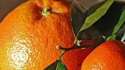 kulit jeruk mandarin, jeruk keprok, jeruk maseh, jeruk jepun