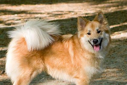 ماذا تاكل الكلاب وطريقة تغذية الكلاب