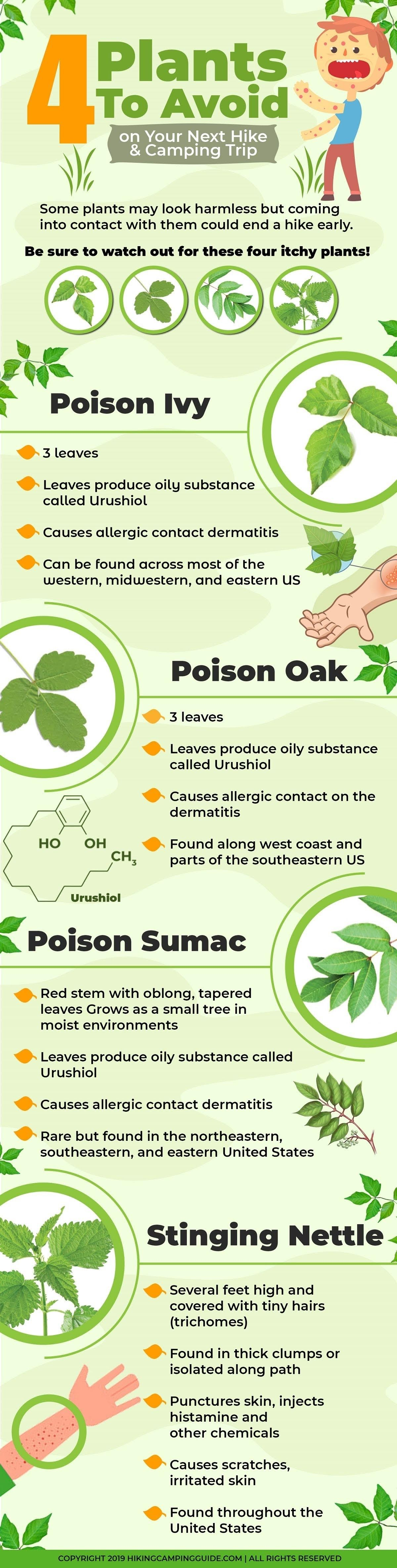4 Plants to Avoid on Your Next Hike & Camping Trip #infographic
