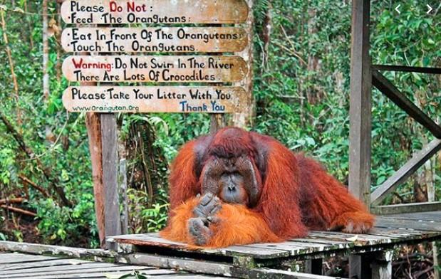 CAMP LEAKEY Taman Nasional Tanjung Puting