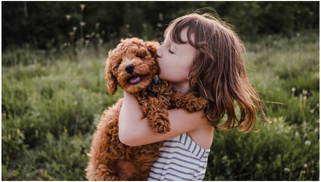 Dogs, Dog Cute,