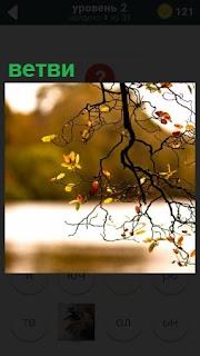 Осенний пейзаж, ветви дерева на переднем плане без листьев