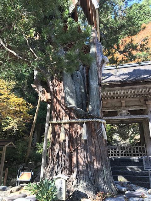 大悲山 峰定寺 ご神木