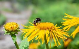 Alergi Dan Mitos-mitos Yang Banyak Beredar