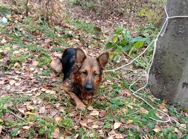 Живодёр в Тверской области привязал собаку к столбу и издевался над ней