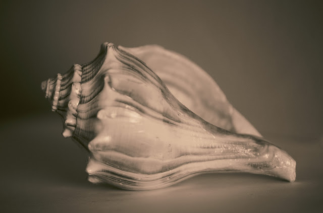 photography, amy myers, journal of a thousand things, split tone, monochrome, shell, seashell