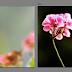 5 Aplikasi Photo Editor Terbaik Untuk Anda