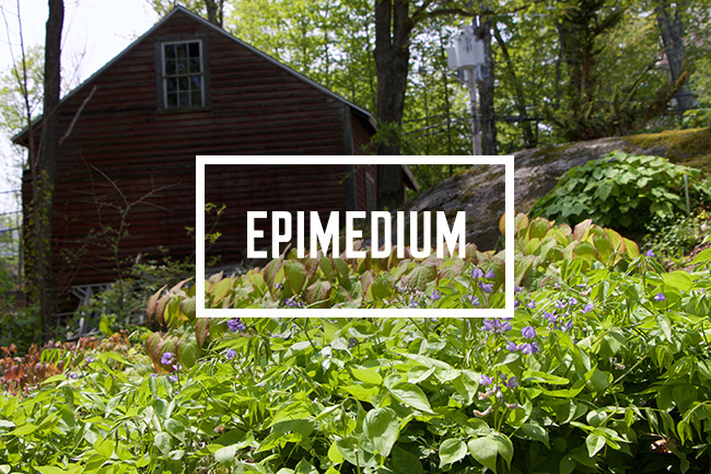 Growing with plants: The Cure for Epimedium Deficit Disorder ...