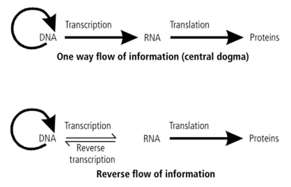 Reverse flow of information