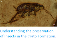 http://sciencythoughts.blogspot.co.uk/2015/02/understanding-preservation-of-insects.html