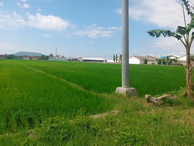 Muncar Banyuwangi