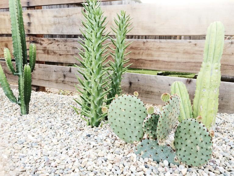 cactus garden plants rock garden