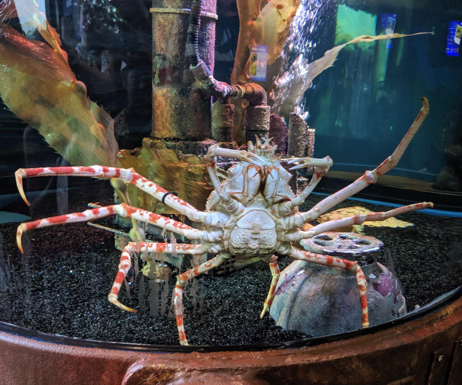 The Best Sea Life Aquariums in the UK  - Sea Life Loch Lomond