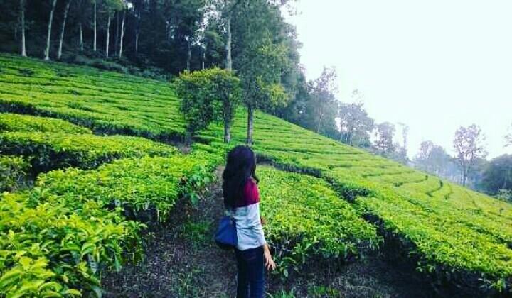 8 Destinasi Wisata Keluarga Di Bogor yang Wajib Dipilih ...