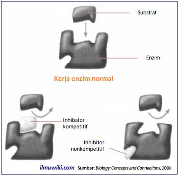 gambar inhibitor kompetitif dan inhibitor non-kompetitif
