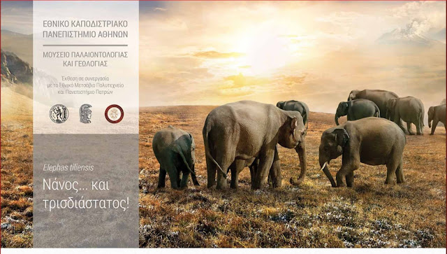 Ο θρυλικός ελέφαντας της Τήλου - Το εξαφανισμένο είδος που έφτασε στο νησί κολυμπώντας πριν από 45.000 χρόνια