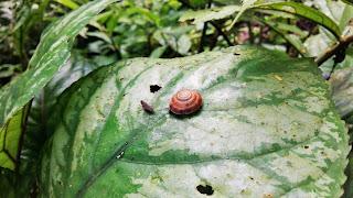 Serangga ada di atas daun dalam hutan