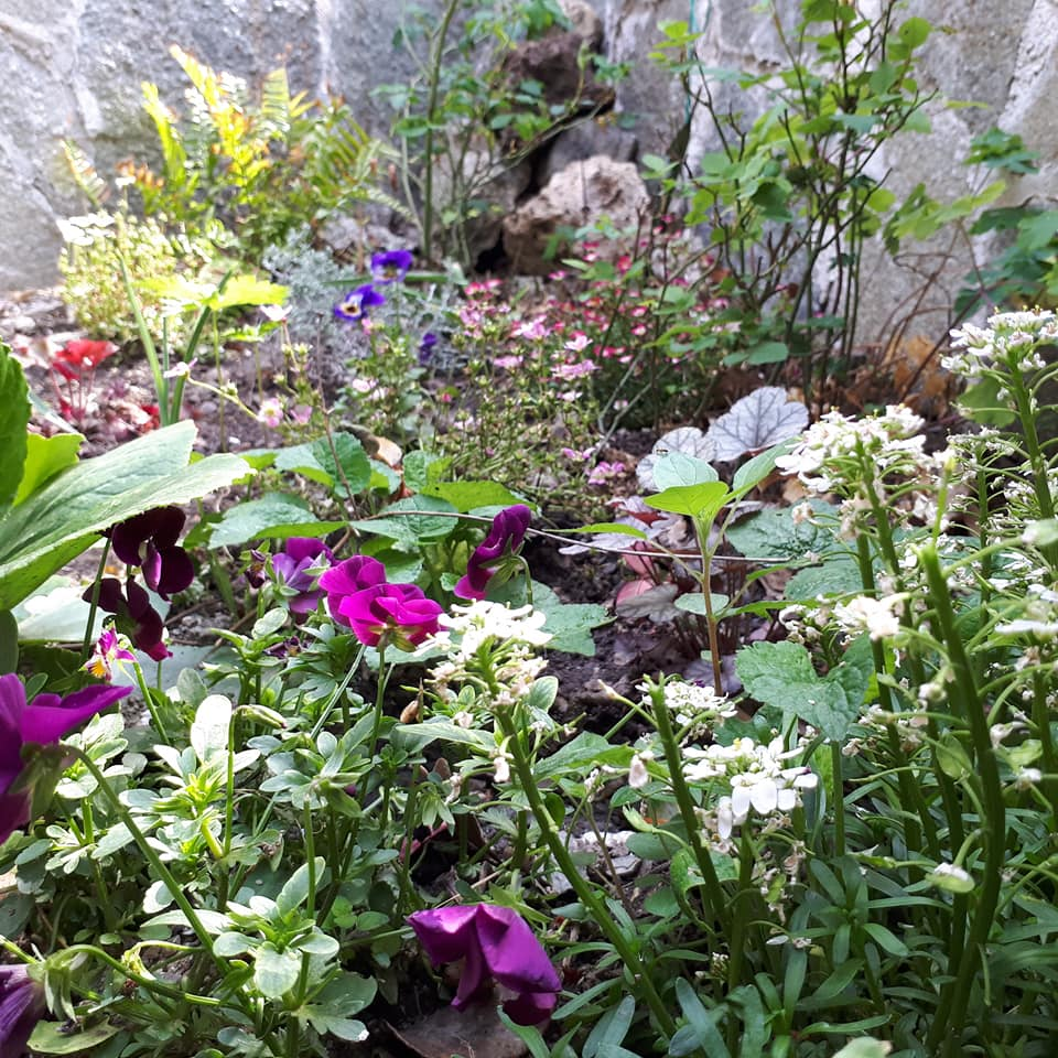 Piante Da Giardino Ombroso il giardino dei colori, esperimento 1 - colour schemes in