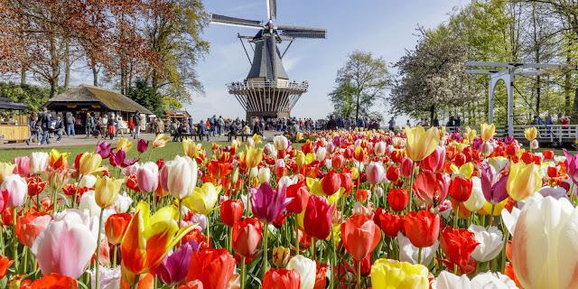 Melawat Taman Antara Tercantik Di Dunia Di Keukenhof, Belanda