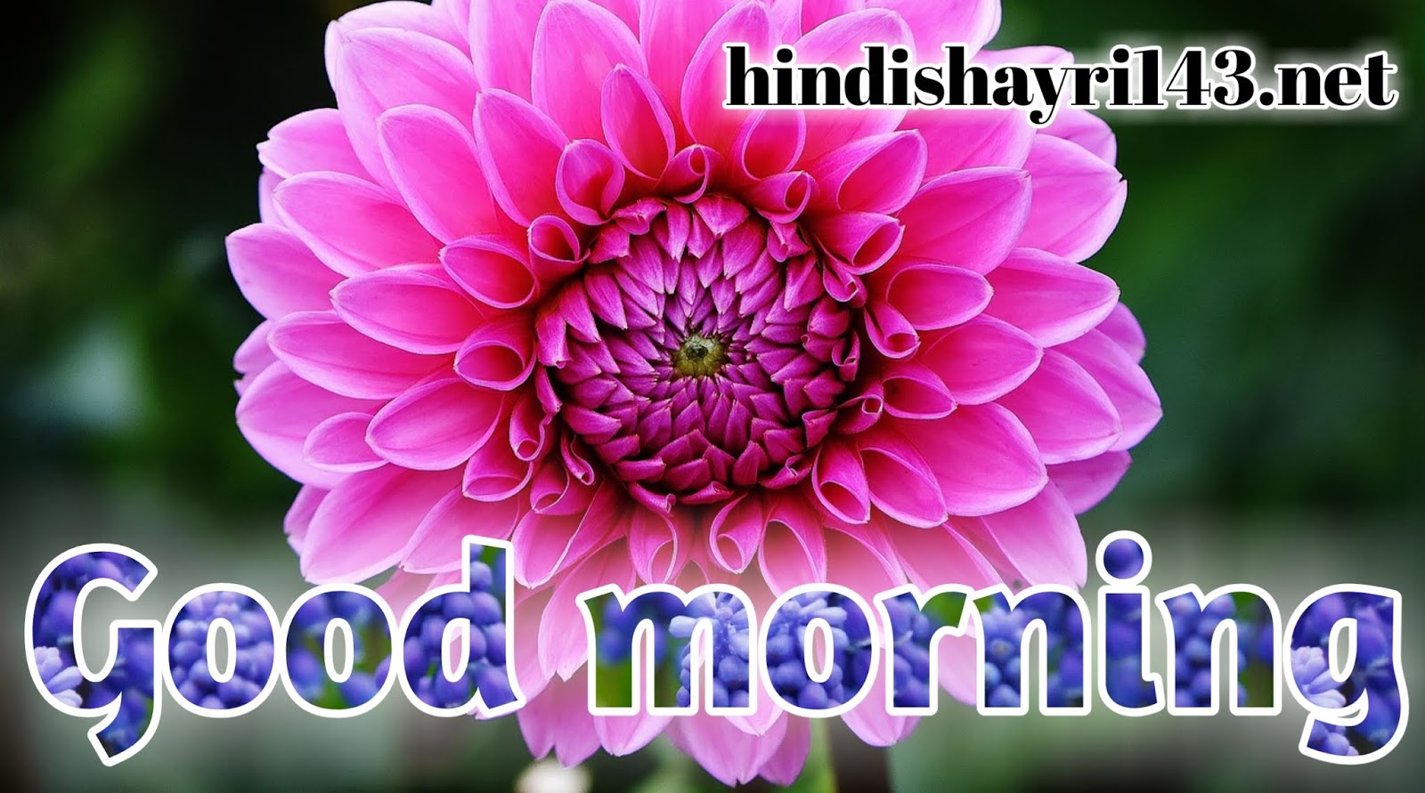 500 Good Morning Rose Image Good Morning Images With Rose Flowers