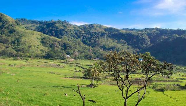 Desa Moni