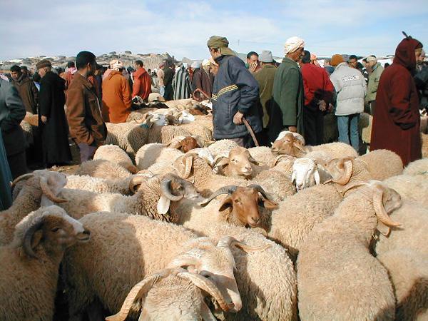 خبر سار... 500 درهم لهؤلاء المغاربة بمناسبة عيد الأضحى المبارك