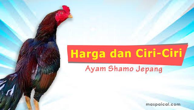 Daftar Harga dan Ciri Ciri Ayam Shamo - maspaical.com