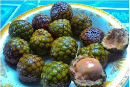 The Custom Fruits Of Aceh