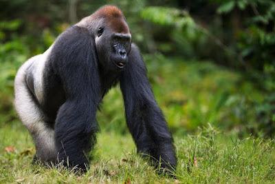 nesli tükenmekte olan hayvanlar hangileridir nesli tükenme riski ile karşı karşıya olan hayvanlar,nesli tükenmekte olan hayvanlar nelerdir ?