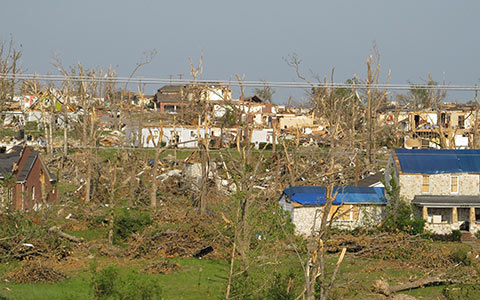 Trees can suffer windsnap or windthrow during violent weather systems