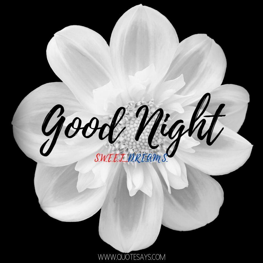 Good Night White Flower