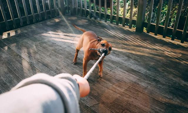 'Hero' dog saves owner