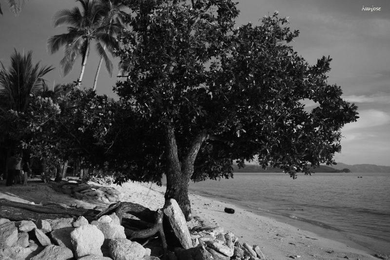 Mangrove tree in Sarangani Bay in Mindanao