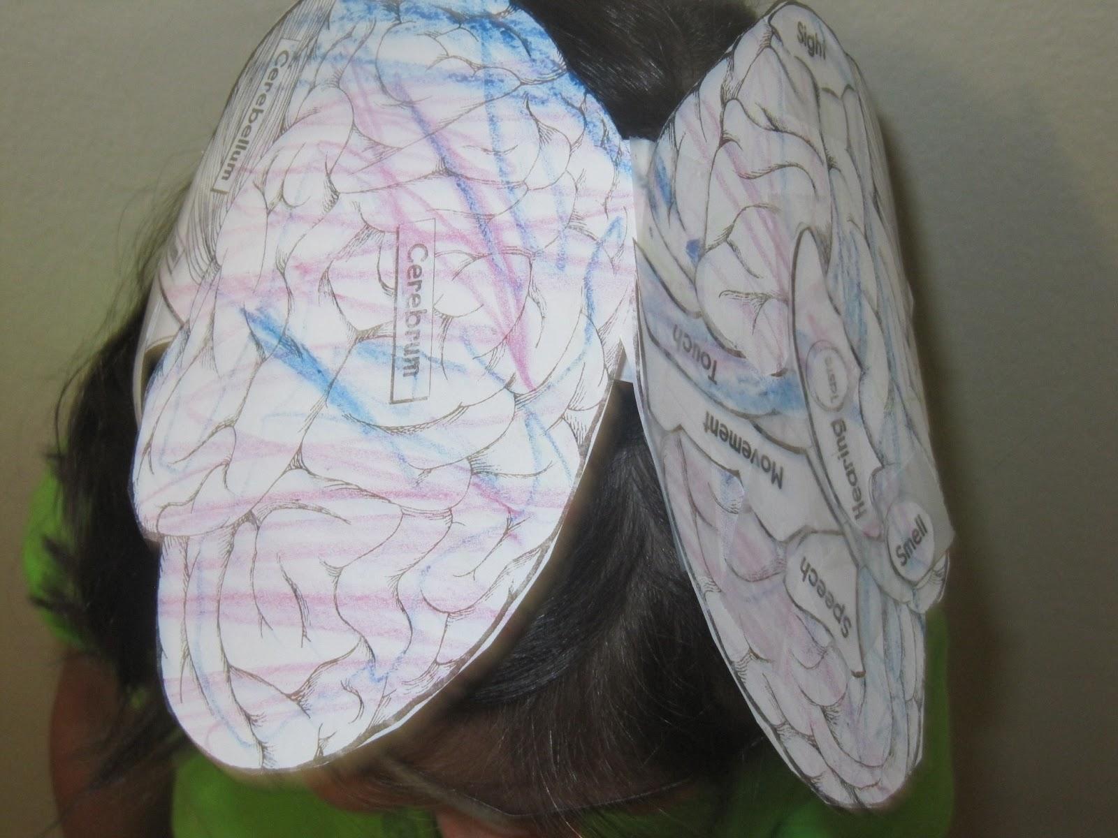 jewish homeschool in nyc  sunday science  brain hat