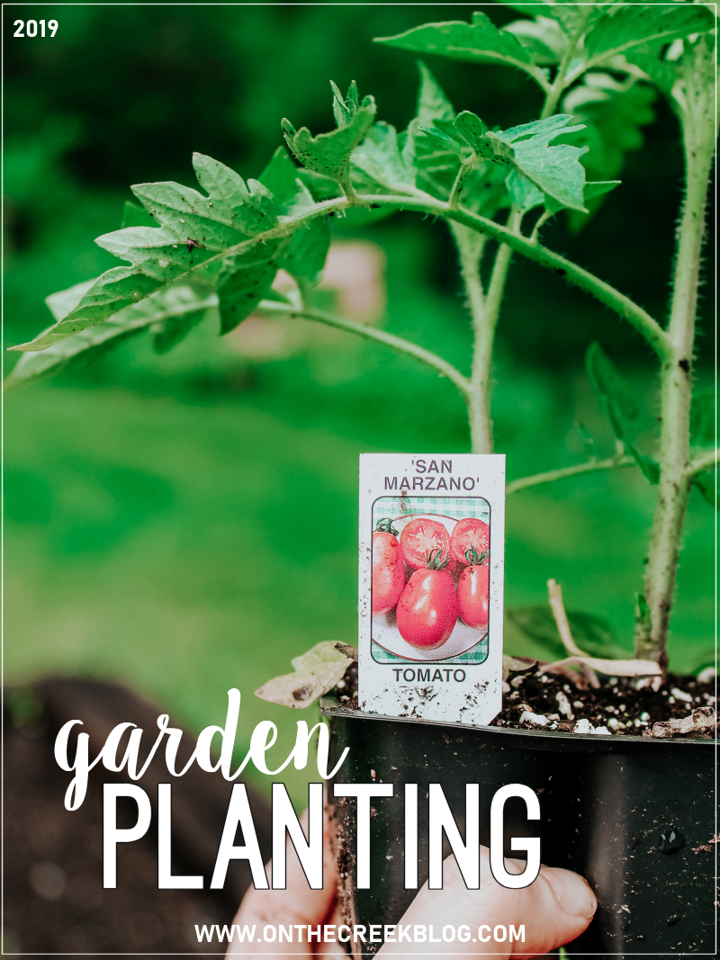 Garden planting 2019 | See what we planted in our garden this year!