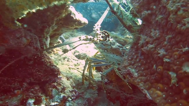 Ft. Lauderdale Diving